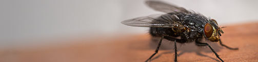 Cluster Fly Exterminators in Wisconsin