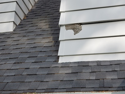 wasp's nest extermination on chimney siding