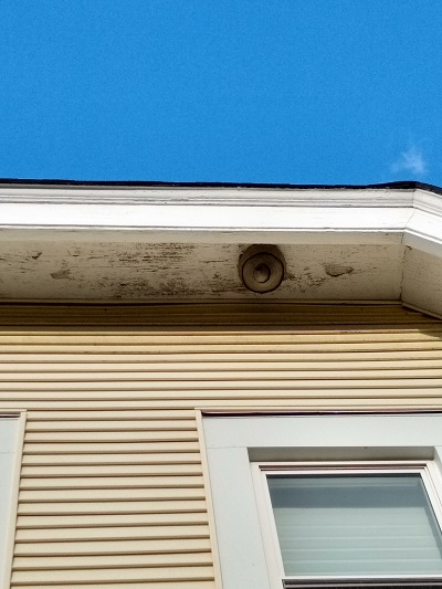 Wasp's nest extermination on home roof