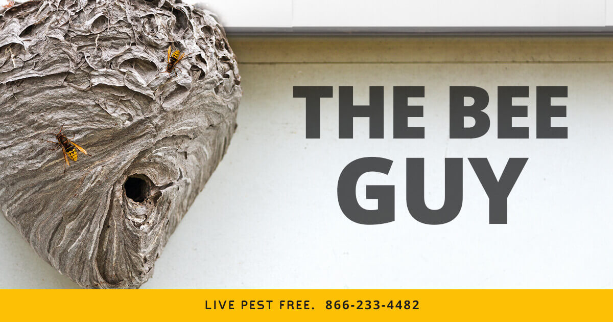 Pest Identification for Control, Extermination and Removal