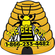Stinging Insect Extermination Wisconsin